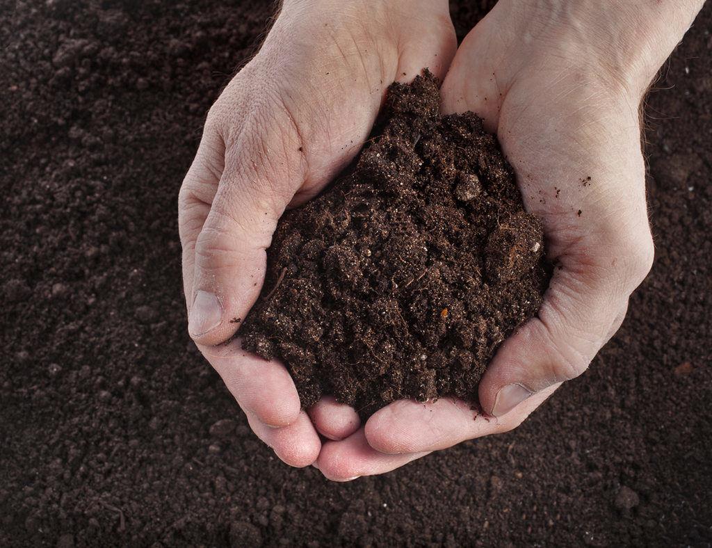 москва почва картинки фото